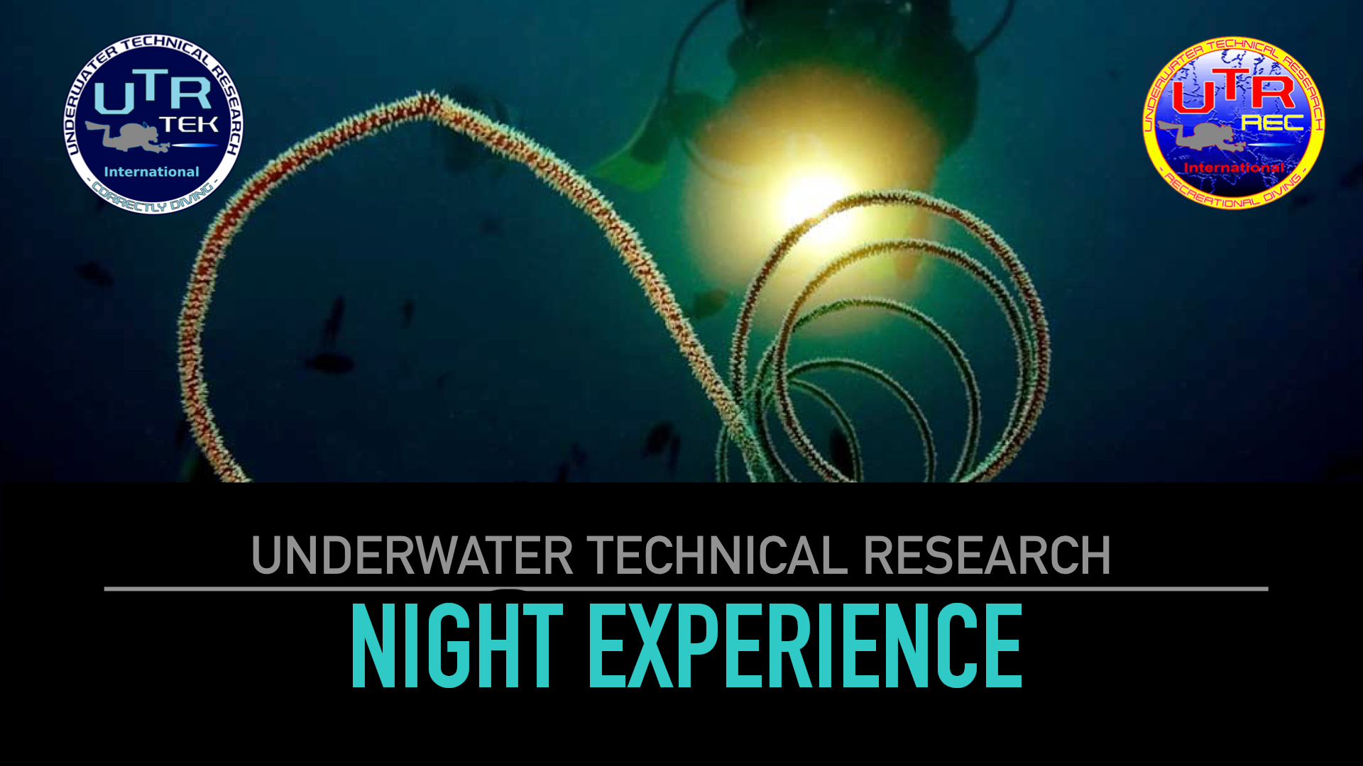 NIGHT DIVING EXPERIENCE